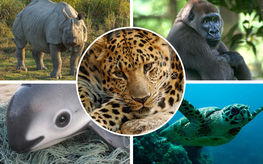 an analysis of the animal species in the world The world animal foundation is a non-profit organization dedicated to the preservation and protection of the planet and the animals that inhabit it help waf help animals.